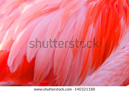 Bright red flamingo birds - stock photo