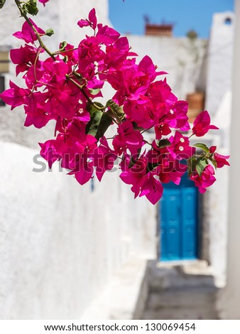 Bright red flowers growing in the city street - stock photo