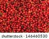 bright red ripe fresh gathered cherries background - stock photo