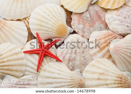 Bright red starfish sea star over background of weathered sea shells - stock photo