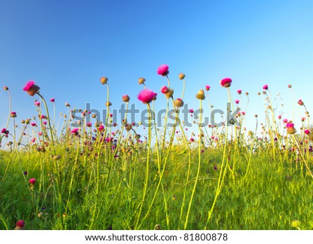 Bright rose flowers. Composition of the nature - stock photo