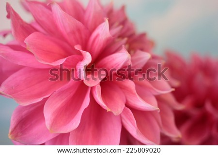 bright solar flower dahlia as symbol holiday - stock photo