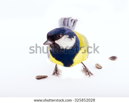 bright spring bird one animal  great tit on a white background - stock photo