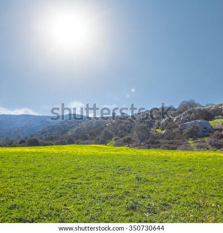 bright spring fields scene - stock photo