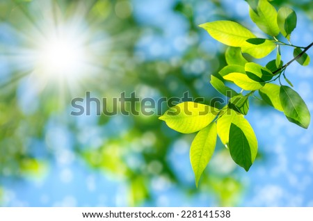 Bright spring natural background - stock photo