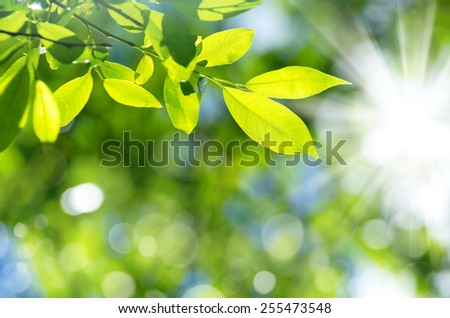 Bright spring natural background from the fresh leaves - stock photo