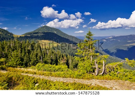 Bright summer landscape in the mountains on a sunny day