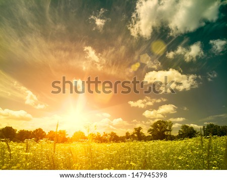 Bright summer sunset over wild meadow. Natural backgrounds with beauty chamomile flowers - stock photo