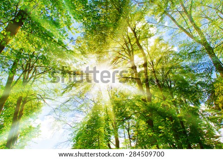 Bright sun in the forest - stock photo