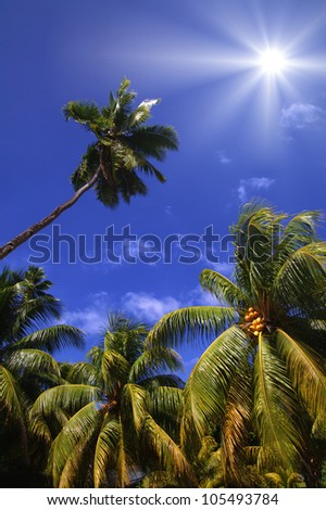Bright sun shining down from a beautiful blue sky on coconut palms from a low angle