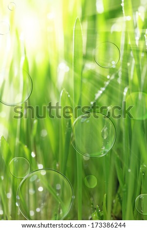 Bright sunny background with wet grass and soap bubbles - stock photo