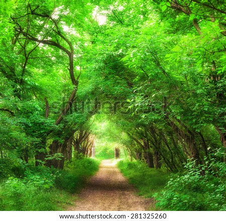 Bright sunny forest - stock photo