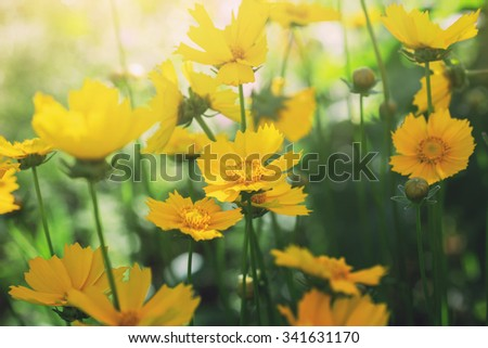 bright sunny landscape with yellow flowers - stock photo