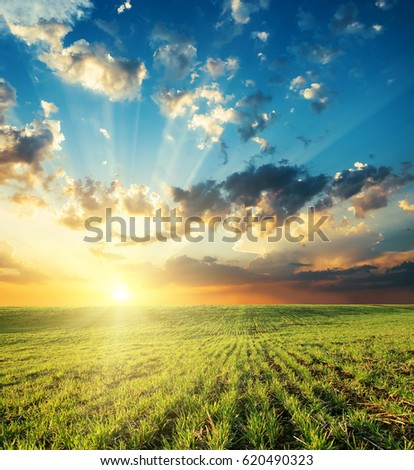 bright sunset in clouds over green grass field