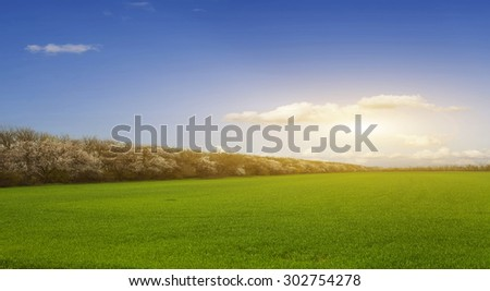 Bright sunset over green field. - stock photo