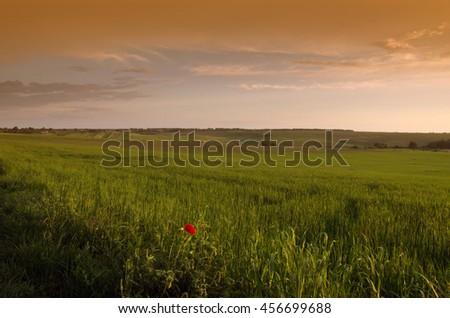 Bright sunset over wheat field. - stock photo