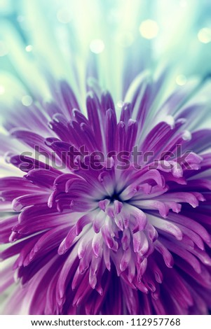 Bright violet  flower close up - stock photo