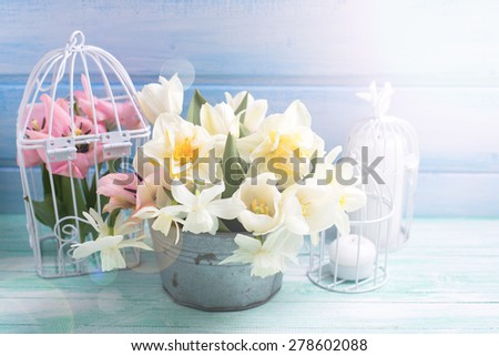 Bright white daffodils and tulips  flowers in bucket, candles on turquoise  painted wooden planks against  blue wall. Selective focus.  - stock photo
