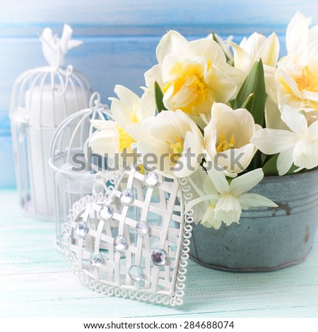 Bright white daffodils and tulips  flowers in bucket, decorative heart and candles on turquoise  painted wooden planks against  blue wall. Selective focus. Square image.
