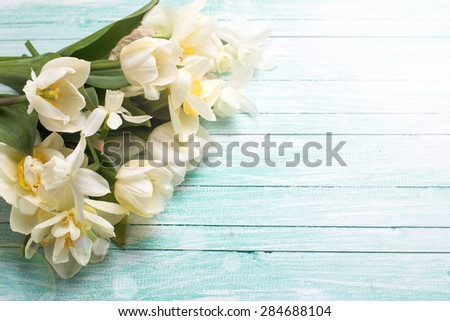 Bright white daffodils and tulips  flowers  in ray of light on turquoise  painted wooden planks. Selective focus. Place for text.  - stock photo