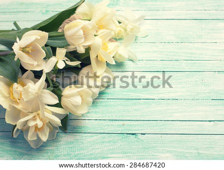 Bright white daffodils and tulips  flowers on turquoise  painted wooden planks. Selective focus. Place for text. Toned image. - stock photo