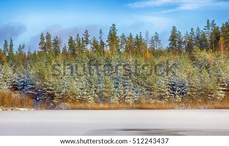 bright winter Sunny forest with snow and fir trees and lake. beautiful forest come cold weather