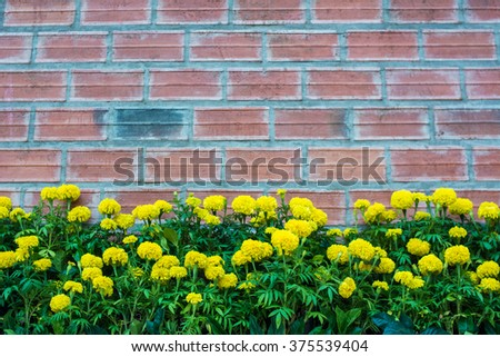 Bright yellow dandelion below of frame brick wall background. Selective focus. Space for text. or design for card or template website - stock photo