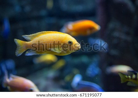 bright yellow fish against blue background