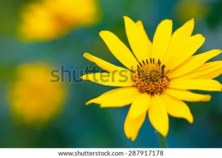 Bright yellow flowers, close-up