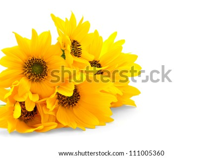 Bright yellow flowers isolated on white background - stock photo