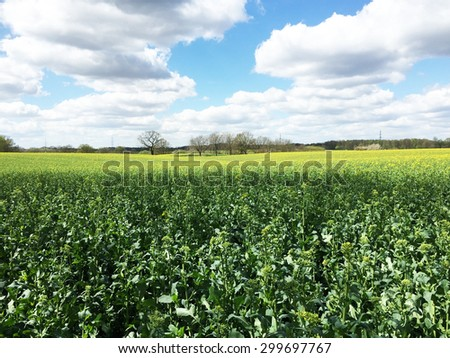 Bright yellow mustard field against a deep blue sky