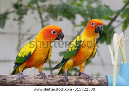 Bright yellow parrot - stock photo