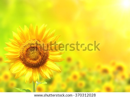 Bright yellow sunflower on green sunny background - stock photo