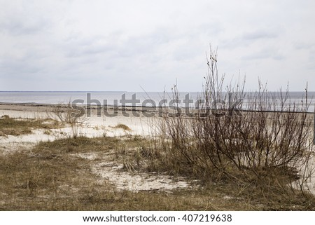 Brightly brown branches of bushes in kidneys against the sea and the rainy sky. - stock photo