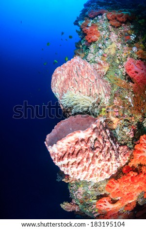 Brightly colored soft corals and sponges on a healthy tropical coral reef wall - stock photo