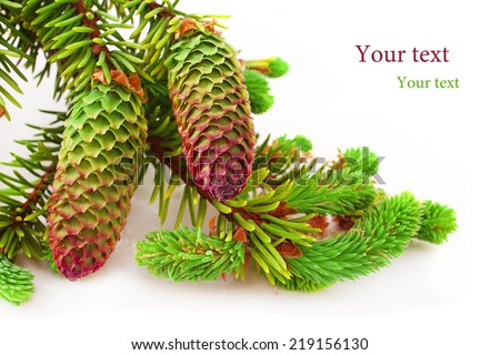 Brightly green prickly branches of a fir-tree - stock photo