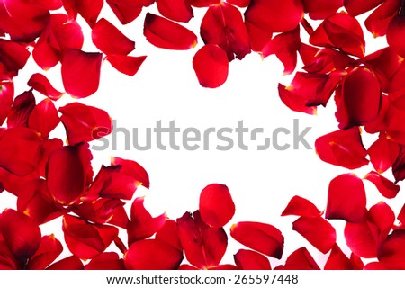 brightly red petals on  white background as frame - stock photo