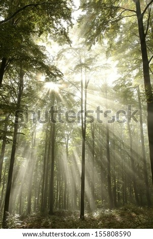 Brightness of the sun among the branches in misty autumn forest. - stock photo