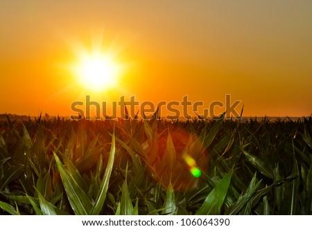Brilliant orange sunrise over a Corn field in Iowa, with a bright yellow sun on a cool springl morning. - stock photo