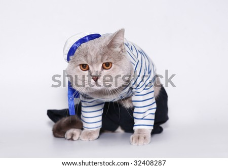 British cat in a suit of the seaman. - stock photo
