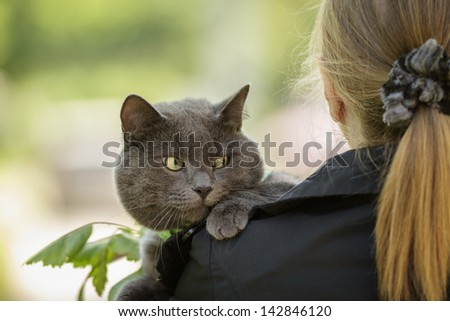 british cat on shoulder view from the back - stock photo