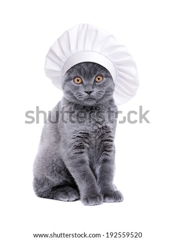 british cat wearing chef hat - stock photo