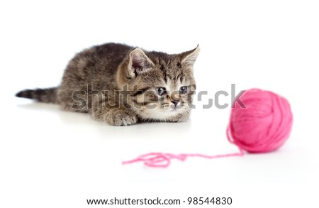 British kitten playing red clew or ball isolated - stock photo