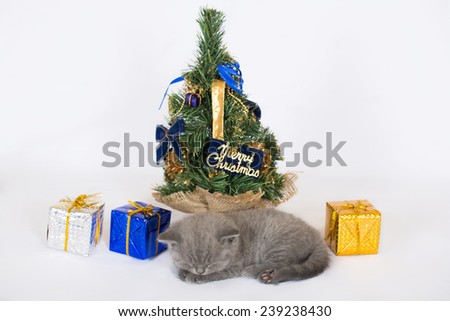 British kitten with Christmas decorations on white background  - stock photo