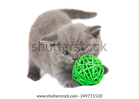 British kitten with the ball on a white background  - stock photo