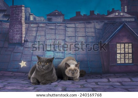 British Shorthair cat couple on a night roof - stock photo