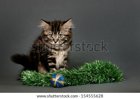 British Shorthair kitten  with Christmas ornament on a gray background.