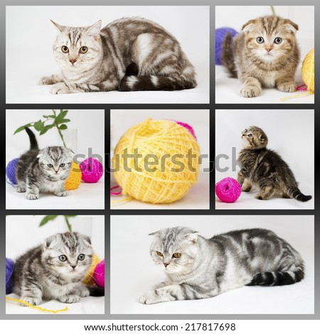 British shorthair kittens on white background. Collage with cats. Pets in the studio. - stock photo
