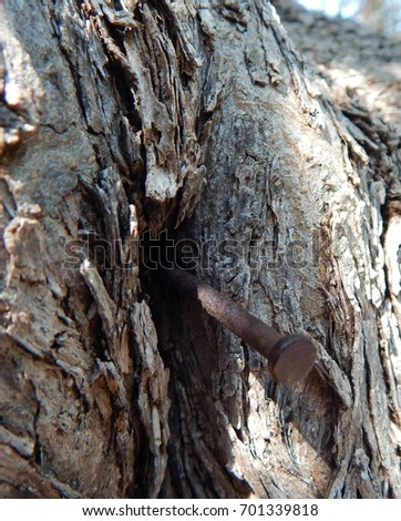 Brittle bark of Olive tree and protruding rusty nail.