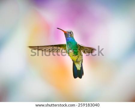 Broad billed Hummingbird. Hummingbird art and crafts. - stock photo